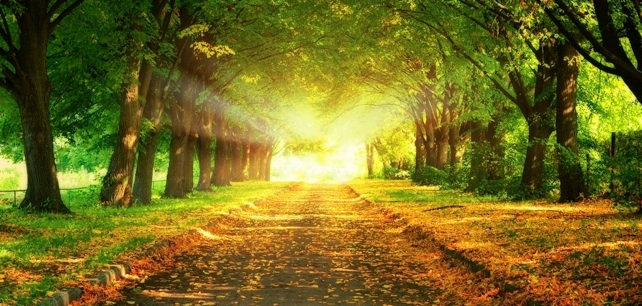 Decreto de Allah, livre arbítrio e nossos pecados