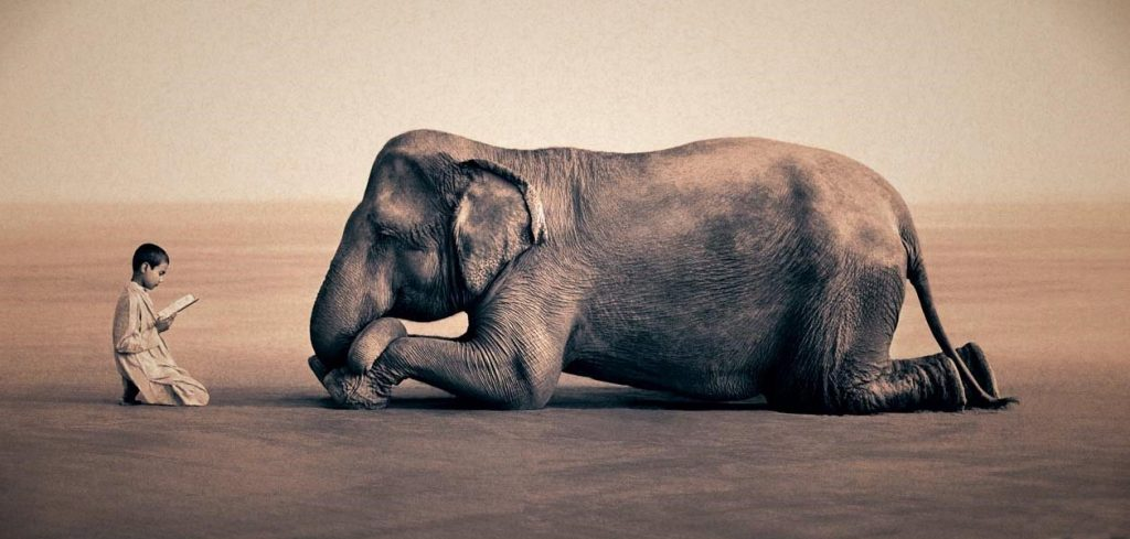 A História do Povo do Elefante
